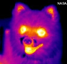 infrared_dog-cropped