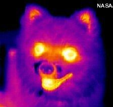 Infrared dog
