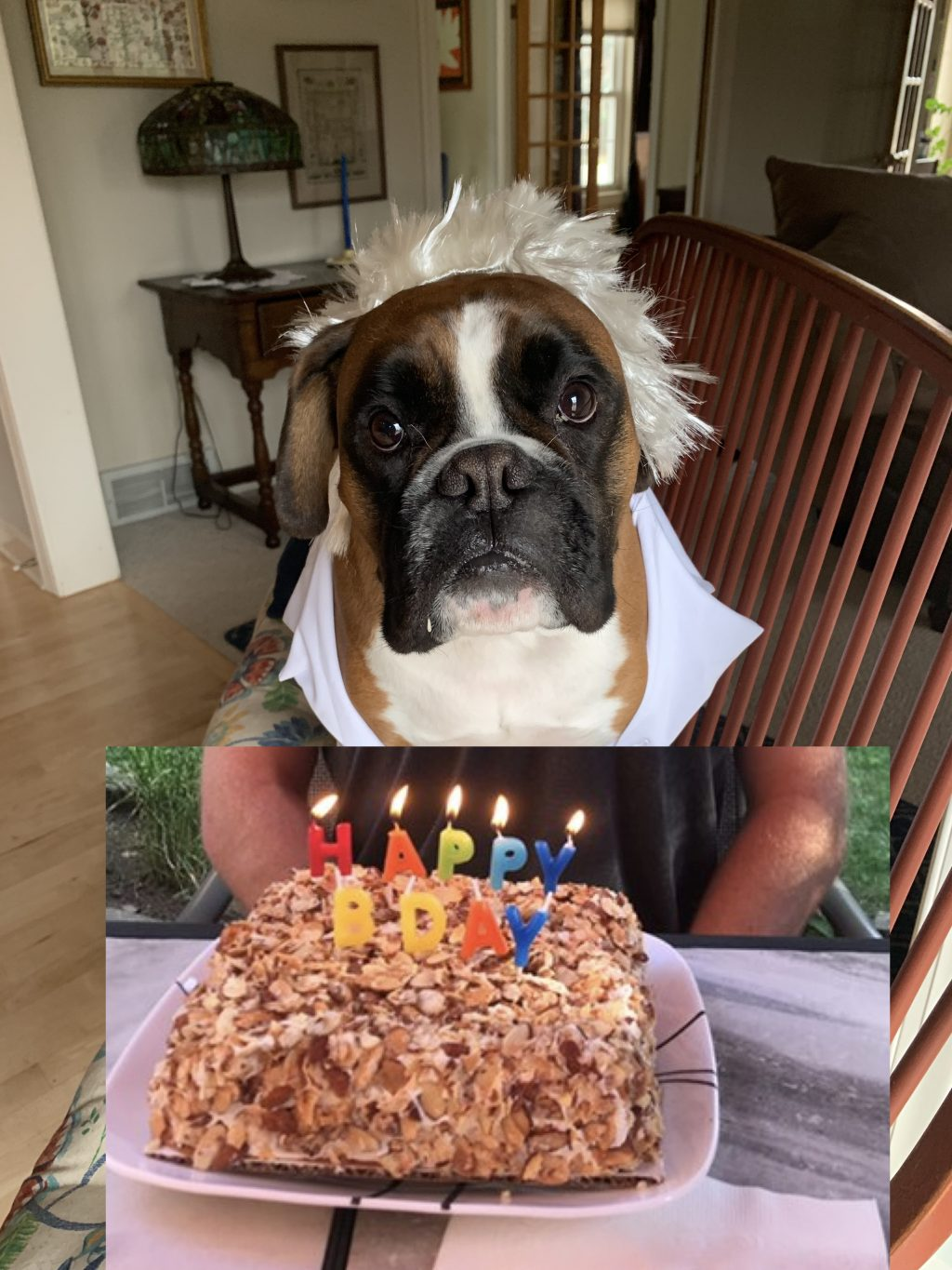 Birthday cake and Louie