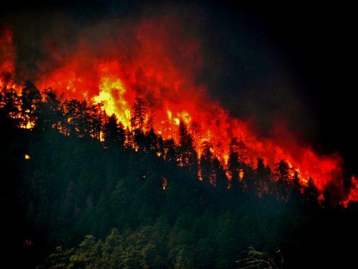 Wildfire Trees ablaze