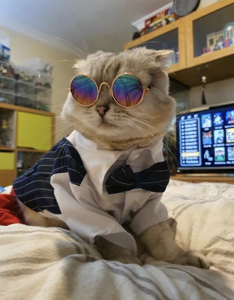 Theo the cat with sunglasses