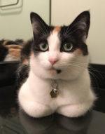 Dev's cat