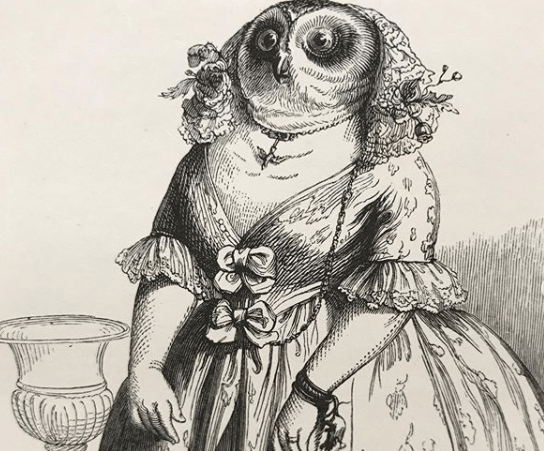 Owl dress up drawing met museum