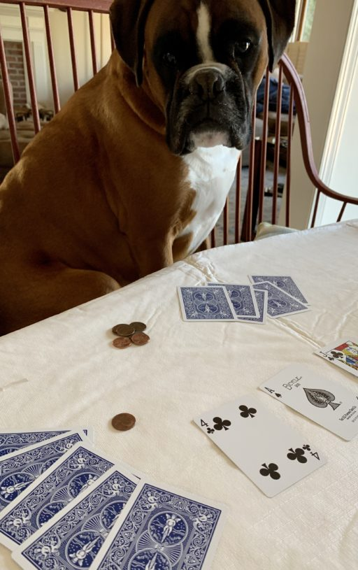 Playing cards with Louie