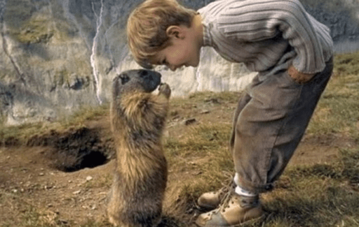 tarbagan marmot with child