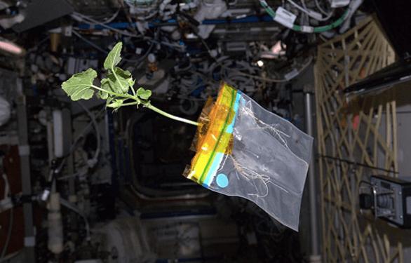 Zucchini in space
