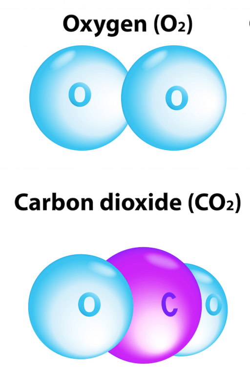 Oxygen and carbon dioxide molecules