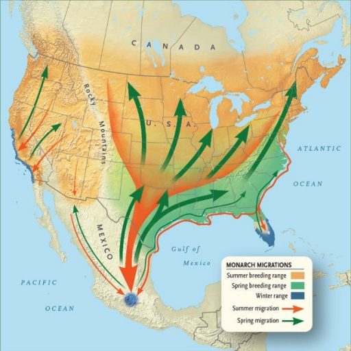 monarch-butterfly-migration-route