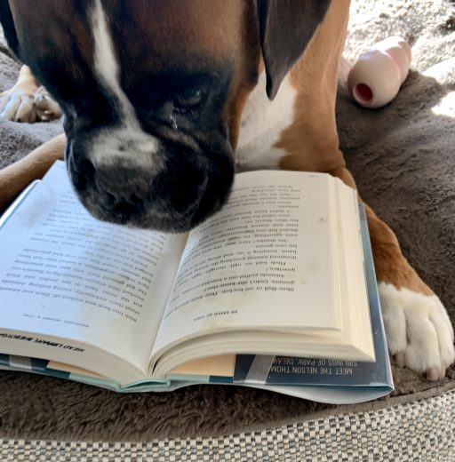 Louie reading