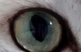 Someone is watching you : eye