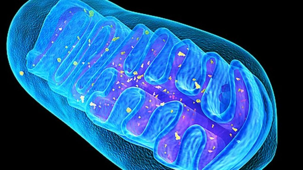 Mitochondrial DNA determines new species