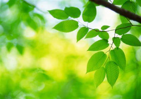 Plants create fuel via photosynthesis