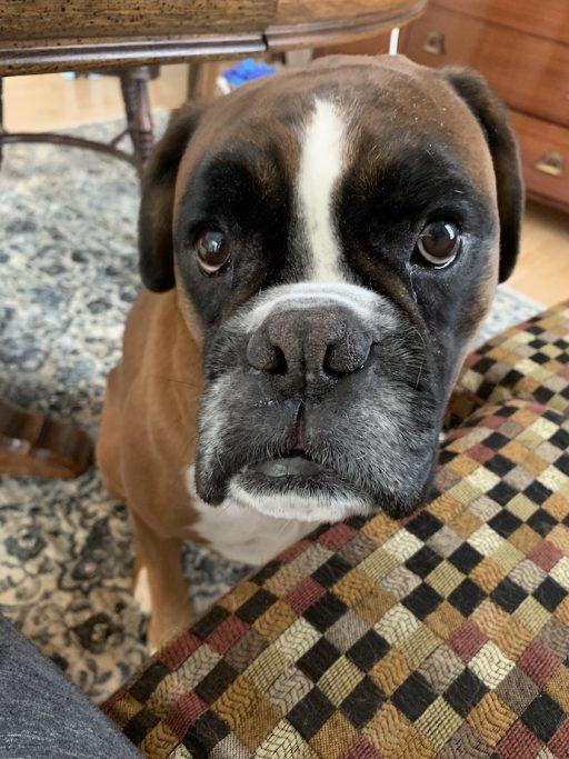 Skeptical Louie