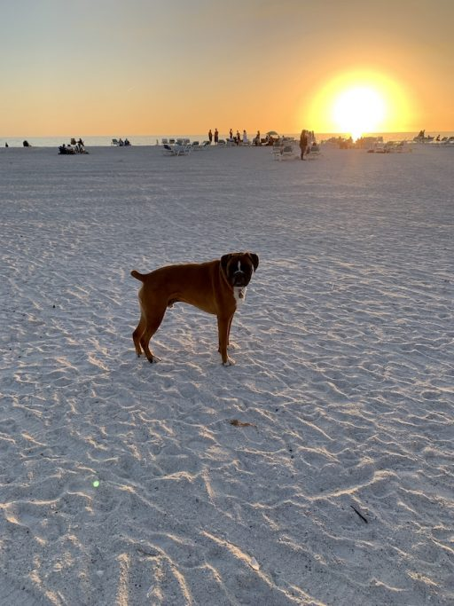 Louie loves the beach