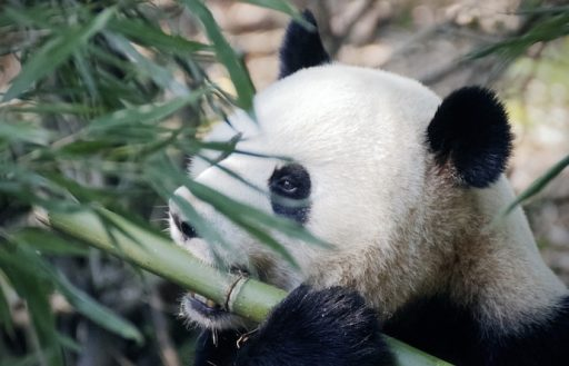 Bamboo is sustainable make sense of science