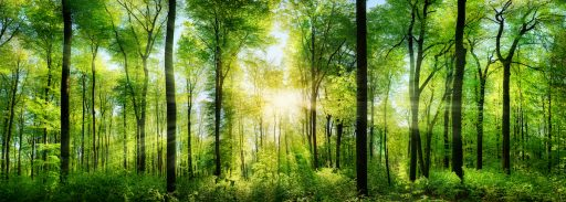 23 Ways to Be Happier sunlight and forest
