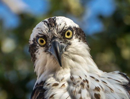 Awareness and Cortisol Hawk