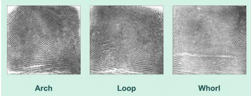 3 Main Fingerprint patterns