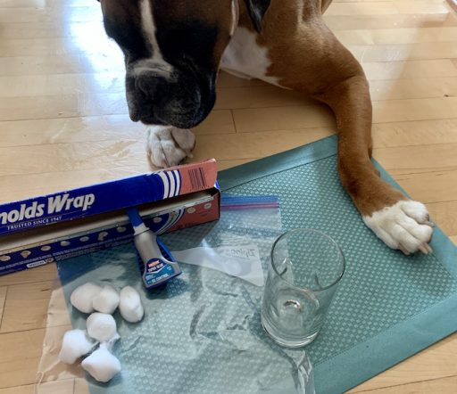 Forensic Experiments Supplies