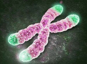 How do telomeres affect aging?