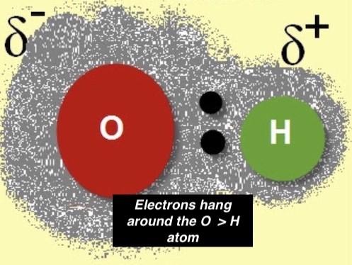Polarity of a water molecule