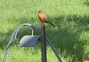 Robin parent on high alert